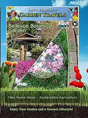 Garden Travels - Bellevue Botanical Garden - Hellebores