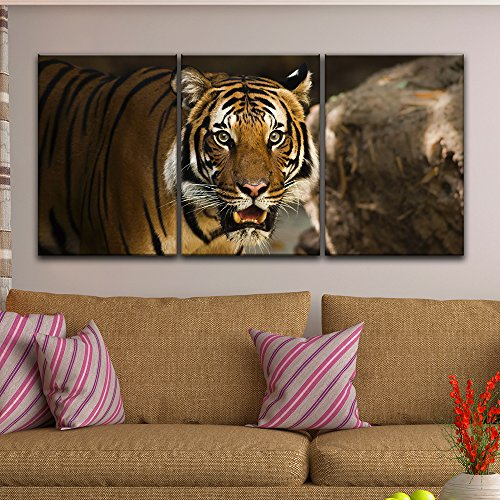 wall26 - 3 Panel Canvas Wall Art - A Tiger Staring at the Front - Giclee Print Gallery Wrap Modern Home Decor Ready to Hang - 24