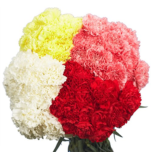 GlobalRose 100 Fresh Assorted Color Carnations - Express Flower Delivery