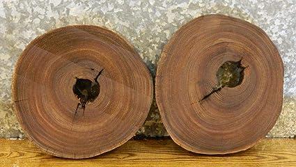 2 Rustic Tree Log Slice Round Cut Elm Wall Artroom Decor Wood Slabs