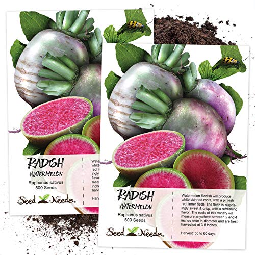 Seed Needs, Watermelon Radish (Raphanus sativus) Twin Pack of 500 Seeds Each ()