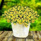 Venta! Semillas sector de limón Superbells calibrachoa Petunia flor anual, Professional Pack, 100 semillas / Bolsa, # ZX4XZ0