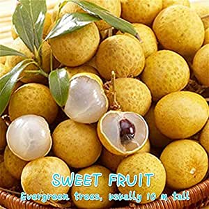 SwansGreen A Bag 5 Pcs Longan Seeds Sweet Dragon Eyes Fruit Tree Seeds Flowers Rare Bonsai Potted Plants Seed For Home * Garden Sementes Yellow