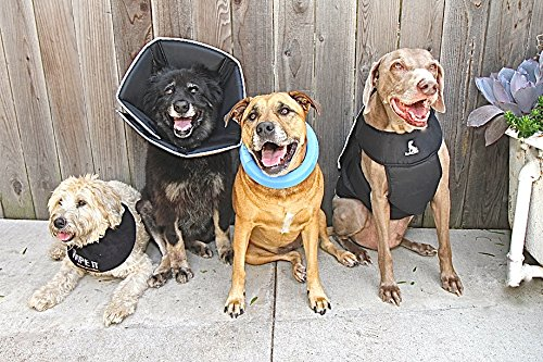 Buy e collar for dogs