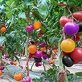 TOPmountain レインボートマト盆栽の種子 100個 ガーデニング用の野菜種子