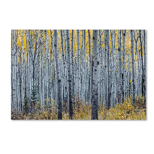 Forest of Aspen Trees by Pierre Leclerc, 22×32-Inch Canvas Wall Art