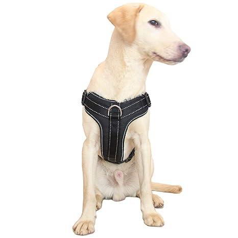 Amazon.com: Maxpower Planet - Arnés para perro, sin tirones ...