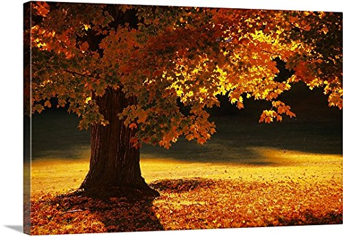 Canvas On Demand Premium Thick-Wrap Canvas Wall Art Print entitled Maple tree, Bennington, Vermont