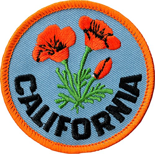 Orange California Poppies on Blue Background - 2