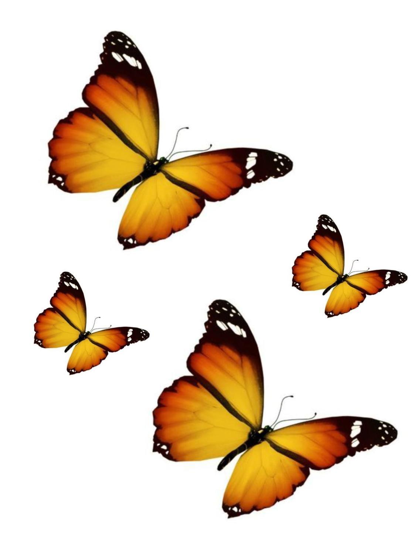 Motivo: Farfalla Laptop Colore: Arancione//Giallo Set di 4 Adesivi per Auto Moto Akacha Frigorifero