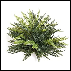 17in. Mini Boston Fern, Outdoor Rated 90