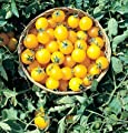 David's Garden Seeds Tomato Cherry Gold Nugget D738 (Gold) 50 Organic Seeds