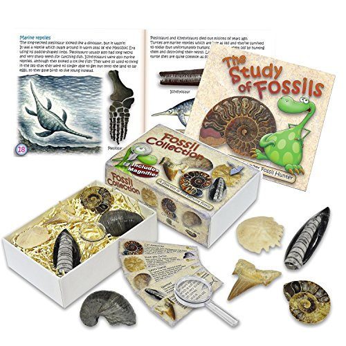 Junior Fossil Collection Box with Study of Fossils Booklet