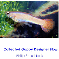 Collected Guppy Designer Blogs