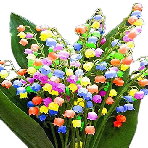 Bell Orchid Seeds Flower Campanula Bonsai Flower Seeds Convallaria Seed 100 pcs/bag mix color