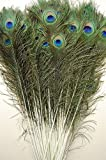 "50 Pcs Peacock Feathers 35""-40"""