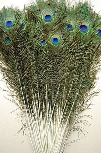 50 Pcs Peacock Feathers -