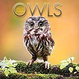 2017 Owls Wall Calendar