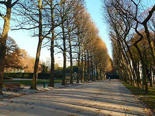 (Home Comforts Peel-n-Stick Poster of Brussels Sidewalk Belgium Walkway Trees Rows Vivid Imagery Poster 24 x 16 Adhesive Sticker Poster Print)