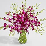#5: ProFlowers - 15 Count purple Purple Dendrobium Orchids with Ginger Vase w/Free Clear Vase - Flowers Mothers Day