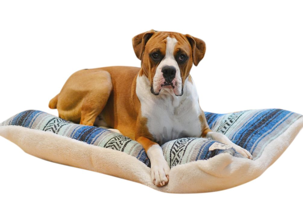 Del Mex Reversible Dog Bed Pillow Made from Mexican Blanket with Sherpa (Small, Navy/Mint)