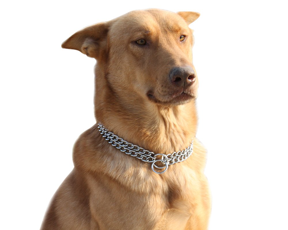 Moonpet Collier réglable pour chien Chaîne en métal ras-du-couen acier inoxydable 2rangs