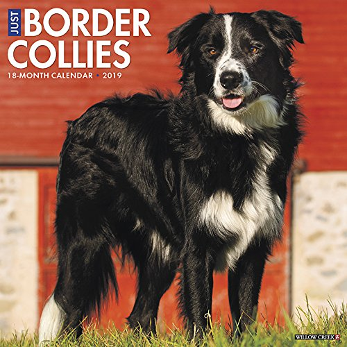 2019 Wall Calendar (Dog Breed Calendar) ()