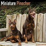 Miniature Pinscher Calendar - Breed Specific Miniature Pinscher Calendar - 2016 Wall calendars - Dog Calendars - Monthly Wall Calendar by Avonside