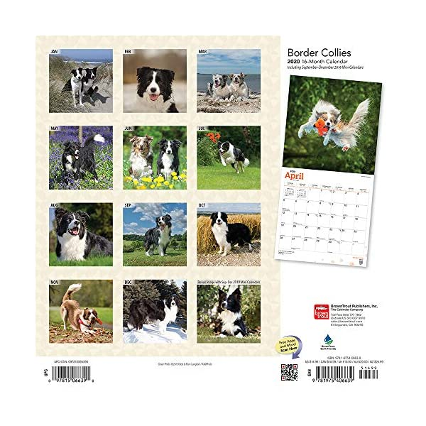 Border Collies 2020 12 x 12 Inch Monthly Square Wall Calendar with Foil Stamped Cover, Animals Dog Breeds Collies (English, Spanish and French Edition) 1