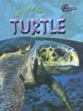 The Life of a Turtle, Clare Hibbert, 1410905462