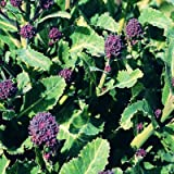 Vegetable Seeds - Broccoli (Early purple Sprouting)