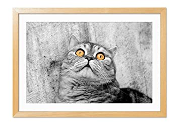 Amazonオレンジ色の目の猫 動物の写真木製額縁アートポスター