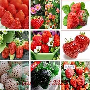 Venta caliente 200pc 2016 semillas frescas de frambuesa orgánica no GMO 10 tipos semillas de frutas Cuatro temporada de siembra envío gratuito