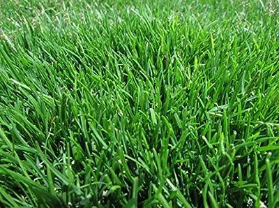 Emerald Zoysia (Zoysia Emerald) Grass seeds-1/8 lb