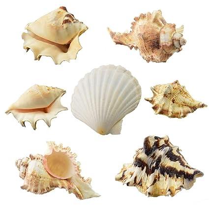 GK 1 kg de conchas de mar mezcladas para la playa, decoración de ...