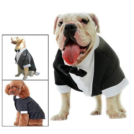 Sylar Ropa para Mascotas, Camisa De Perros Manga Corta Cómoda ...