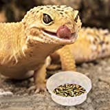 SunGrow Gecko Food and Water Containers, 0.5 Ounce