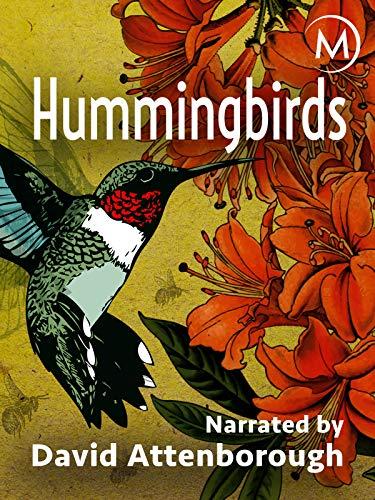 Hummingbirds (Best Hummer In The World)