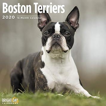 Kitchen Towel 1 Adorable Heart Glasses Frenchie w Boston Terrier Markings