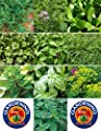 1000 Culinary Herb Seed Garden Collection - 10 Different Herbs Comb S/H - TheGardeningWorld