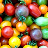Rainbow Cherry Tomato Mix Seeds Colorful Heirloom Blend bin94 (85 Seeds, or 1/4 Gram)