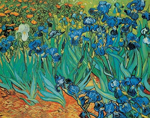 Garden of Irises by Vincent Van Gogh - Art Print / Poster 11x14 inches 11 X 14 Van