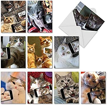 Cat with attitude greeting card collection