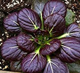 Tatsoi Red (Brassica Rapa Chinensis Group) Vegetable Plant, 1.5g Seeds