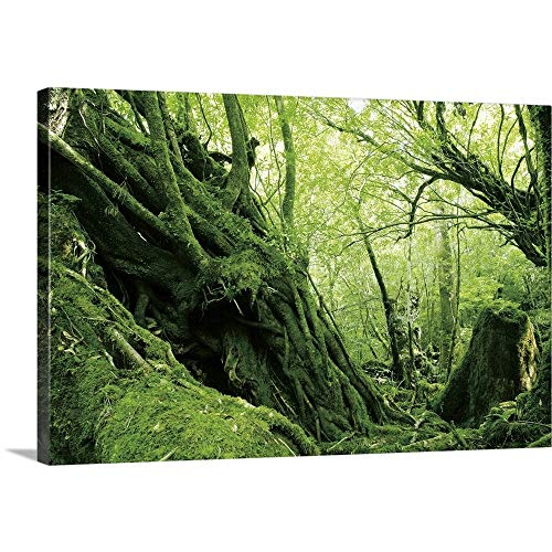 GREATBIGCANVAS Gallery-Wrapped Canvas Entitled Yodogawa Trail, Kagoshima Prefecture, Kyushu, Japan by 60