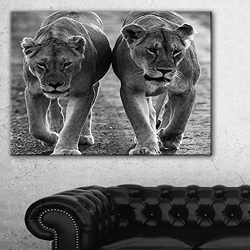 Lions in Black and White Animal Photo Canvas Art