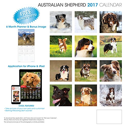 LittleGifts Australian Shepherd 2017 Calendar (3022) Photo #2