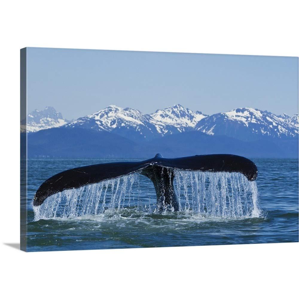 ジョンHydeギャラリー‐ Humpback Whale fluking in Lynn Canal with Chilkat山の距離 48