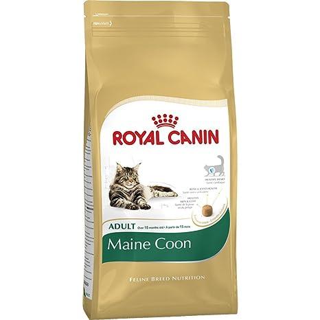 Alimento para gato adulto de Royal Canin, 10 kg, para Maine Coon, por