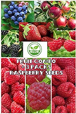 Fruit Combo Pack Raspberry, Blackberry, Blueberry, Strawberry, Apple (Organic) 975+ Seeds UPC 600188190564 & 3 Free Packs of Raspberry Seeds